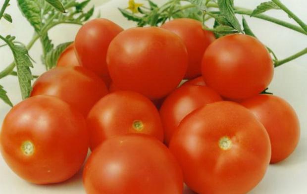 Как сажать томат хоровод 56