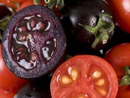 Золотое сердце томаты отзывы фото