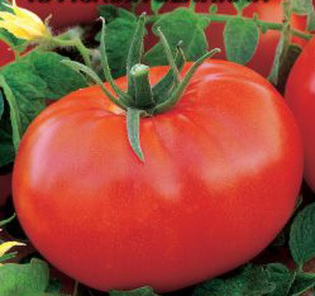 Томат петр великий урожайность характеристика и описание сорта с отзывами и фото