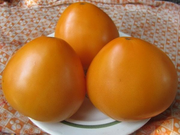 Томат оранж квин