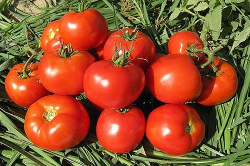 Томат Звезда востока характеристика и описание сорта урожайность с фото