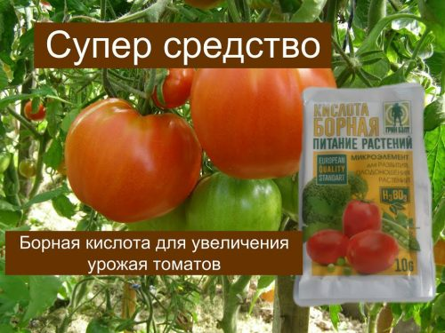 Борная кислота для томатов