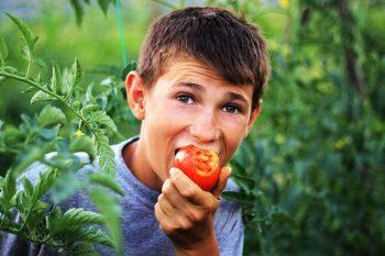 Мальчик ест помидоры
