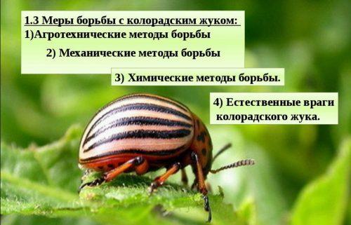 Методы борьбы с жуком