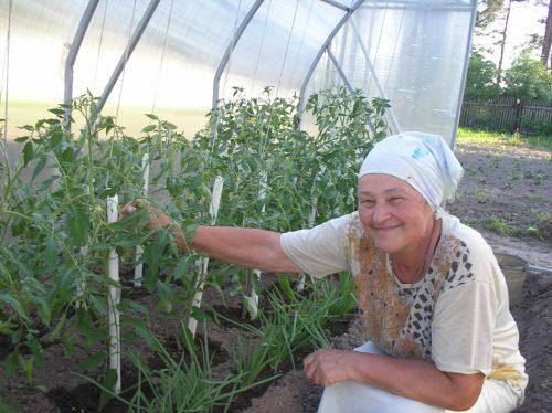Женщина ухаживает за помидорами в теплице