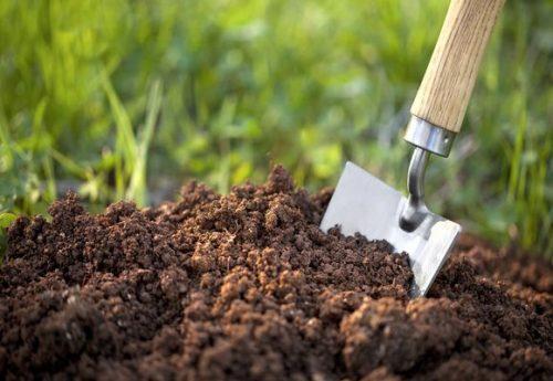 проблемы с почвой