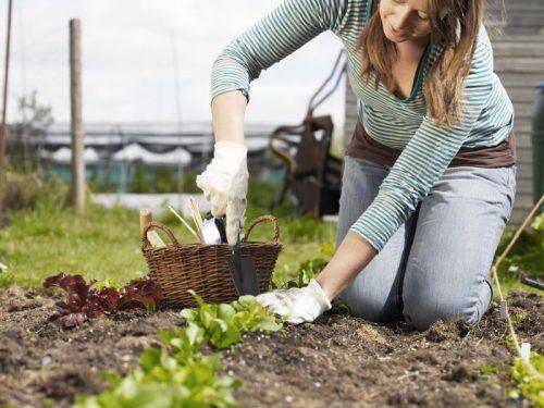 Высаживаем растения
