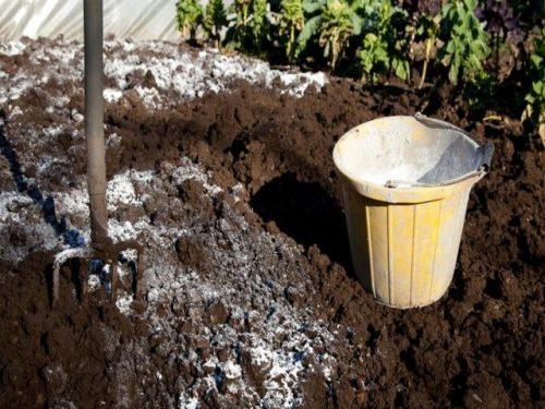Как отрегулировать кислотность почвы на дачном участке, в огороде