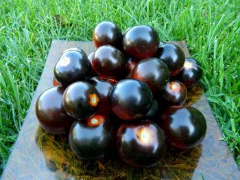 Черные сорта помидоров