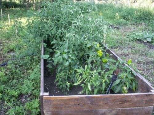высокие грядки для томатов