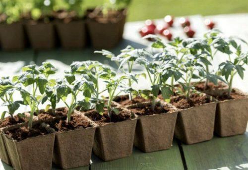 Посев томатов в апреле, когда лучше?