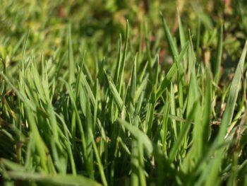 Растения Для Борьбы С Сорняками