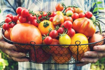 vkusnye-tomaty
