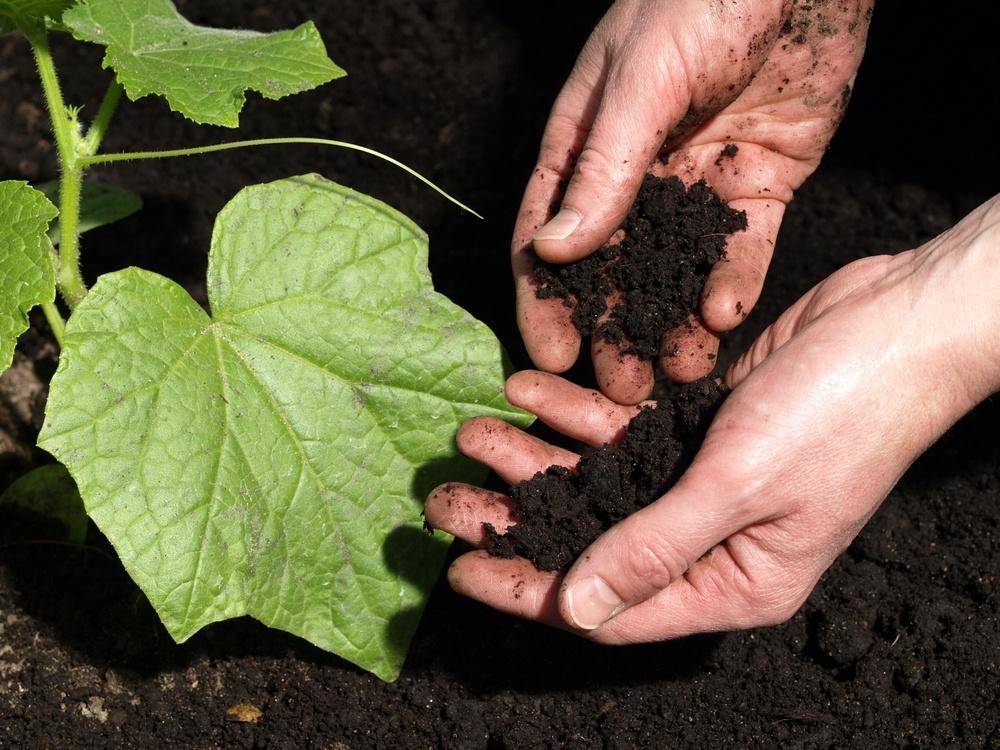 рыхление почвы огурцов