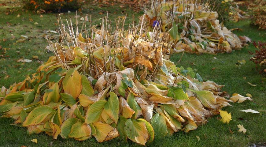 Укрытие куста листвой