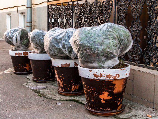 Покрытые пленкой уличные цветы
