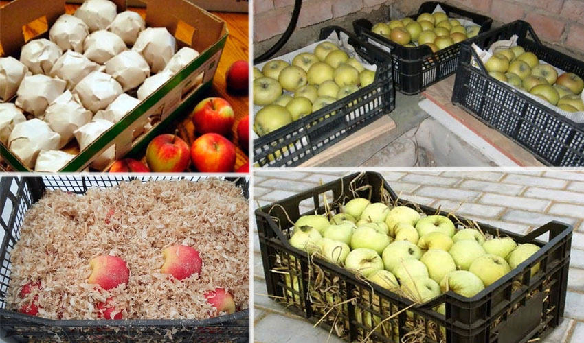 Хранение яблок зимою