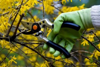 Осенняя обрезка дерева