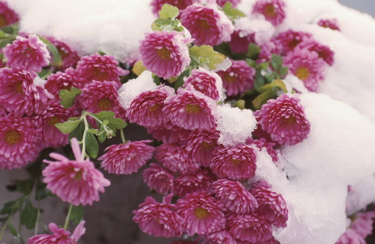 женщин картинки ноябрь цветы супруга
