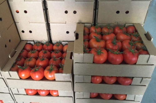 tomaty na zimu