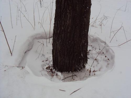 подтаявший снег вокруг дерева