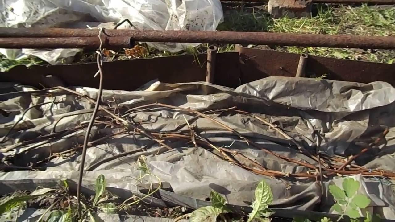 Как укрыть виноград землей фото пошагово