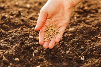Благоприятные дни для посева и пересадки
