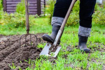 Посевной календарь на 2020 год для Брянской области: выбор благоприятных дней для посева и работы в огороде