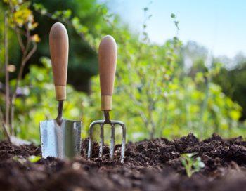 Посевной календарь на 2020 год для Подмосковья: особенности региона, благоприятные дни для посадки и работ в саду