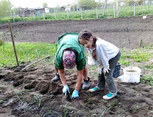 благоприятные дни для работ в огороде