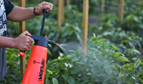 опрыскивание растений от вредителей