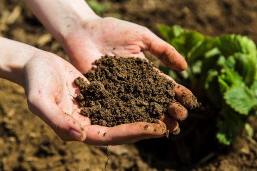 качество почвы
