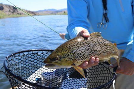 Календарь рыболова на 2020 год по месяцам и дням: расчет благоприятных дней, влияние погодных условий и полезные советы