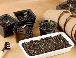 Лунный календарь посадки семян цветов на рассаду на 2020 год: выбор благоприятных дней для посева и пересадки