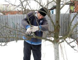 Работы в саду и в огороде