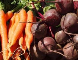 Благоприятные дни для уборки свеклы и моркови