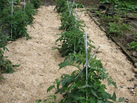 опилки для томатов