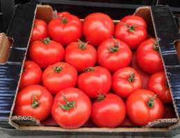 hranenie tomatov