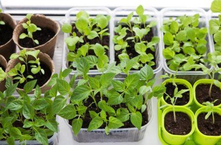 Календарь посева семян на рассаду