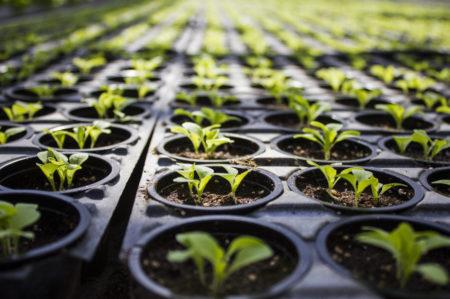 Благоприятные дни для посадки томатов в марте 2019