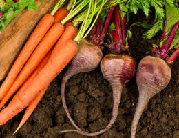 Морковь и свекла