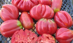 Миниатюра к статье Самые необычные сорта томатов