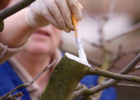 Обработка дерева садовым варом