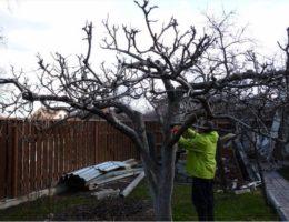 Обрезка кроны дерева