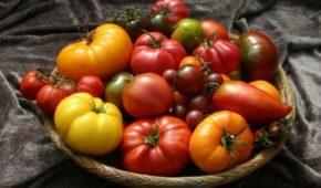 Миниатюра к статье Непасынкующиеся сорта томатов для открытого грунта