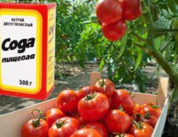 подкормка томатов содой