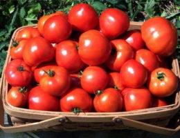 Корзина с красными томатами