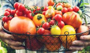 Миниатюра к статье 8 вкуснейших старых сортов томатов из детства