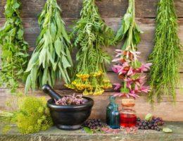 Заготовки лекарственных растений